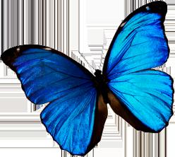 Sommerfugl Adecco